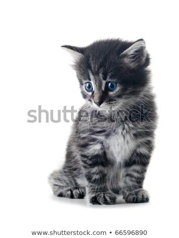 kicsi · szürke · kiscica · fehér · izolált · szemek - stock fotó © Anettphoto