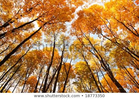 kleurrijk · bladeren · zonnestraal · ochtend · boom · bos - stockfoto © geribody