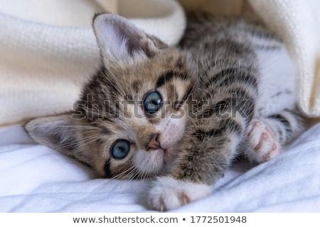 Pequeno vermelho gatinho adormecido cama pacífico Foto stock © ryhor