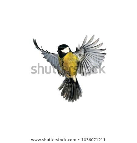 синий · Тит · сидят · природы · птица · Перу - Сток-фото © taviphoto