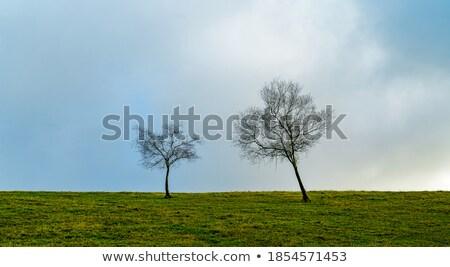 kilátás · folyó · bankok · zöld · fák · kék - stock fotó © mycola