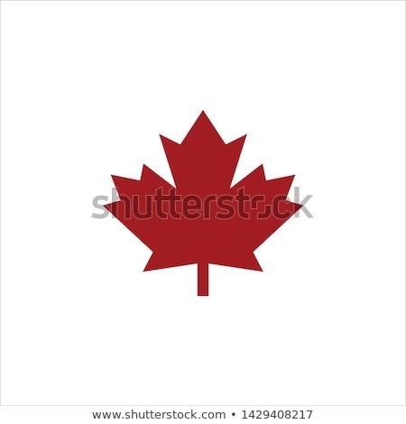 Canada iconen vector ingesteld gestileerde Stockfoto © vectorpro