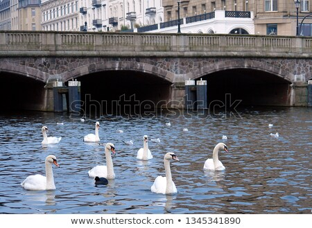 Zwaan rivier mooie witte hamburg stad Stockfoto © meinzahn