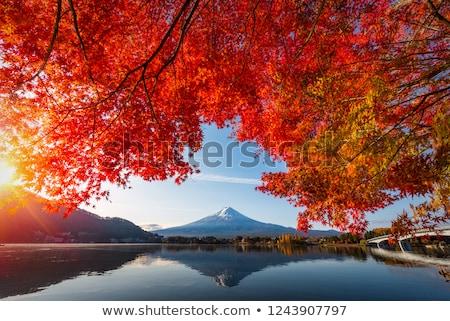 Najaar kleuren esdoorn boom eps vector Stockfoto © beholdereye