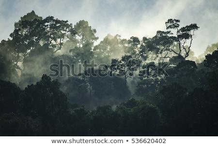 плотный тропические лес LAN озеро юг Сток-фото © smithore