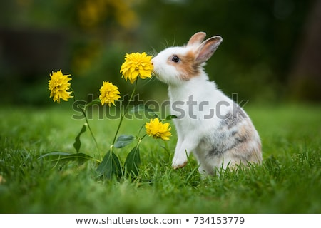 happy rabbit stock photo © derocz