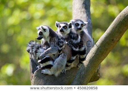 Família foto grama África preto Foto stock © Dermot68