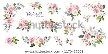 Flor-de-rosa branco 3D crescimento assinar preto Foto stock © andreasberheide