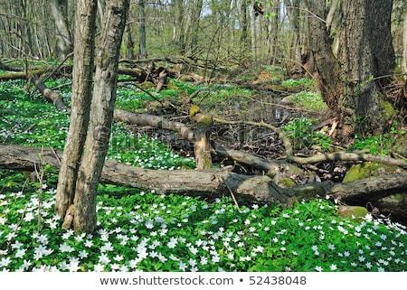 весны пейзаж Blossom области острове небе Сток-фото © olandsfokus