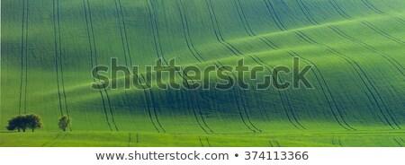 古い ツリー 地上 波 抽象的な ミニマリズム ストックフォト © Taiga