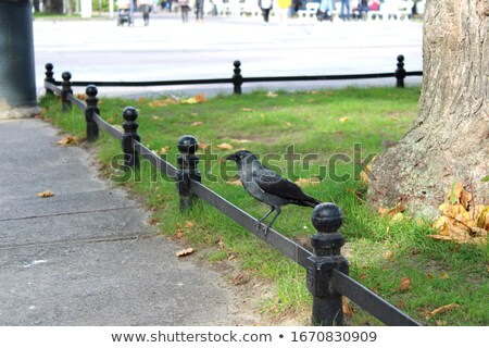 европейский лет трава птица цвета ворон Сток-фото © rekemp