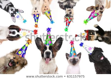 Foto stock: Gatitos · cumpleanos · celebración · feliz