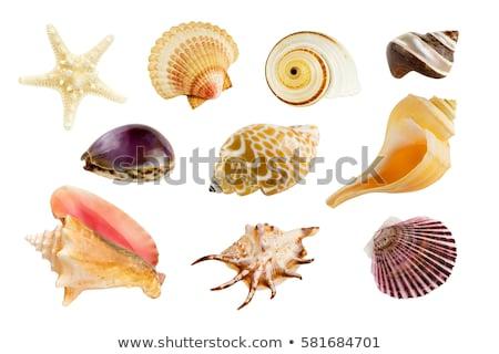 Stockfoto: Zeester · geïsoleerd · witte · vis · oceaan