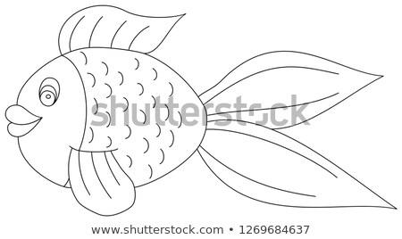 金魚 · 実例 · 画像 · いい · 赤 · 黄色 - ストックフォト © morphart