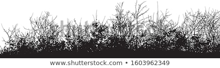 Black Shrub Silhouette Stock photo © derocz