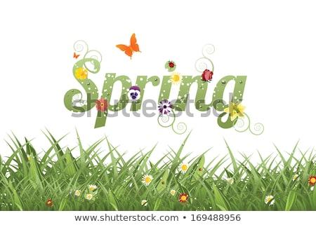 Easter spring background. EPS 10 Stock photo © beholdereye