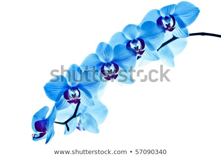 strange blue flower Stock photo © blackmoon979