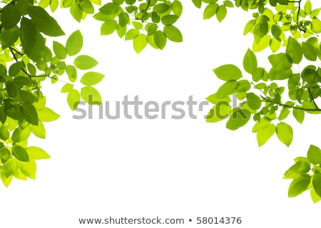 Insects on green leaves in garden Stock photo © bluering
