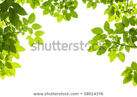 Insecten groene bladeren tuin illustratie natuur landschap Stockfoto © bluering
