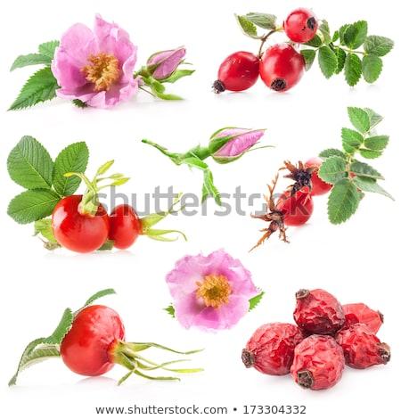 vermelho · rosa · quadris · ramo · folha - foto stock © ptichka