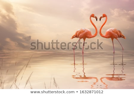 pink flamingos spouses stock photo © adrenalina