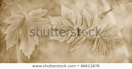 floral grunge frame on old parchment .old paper with floral patt Stock photo © rufous