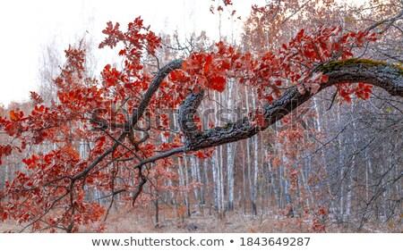 Scena żółty węża oddziału ilustracja drzewo Zdjęcia stock © bluering
