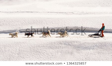 Horizontal view of sled dog race on snow Stock photo © vwalakte
