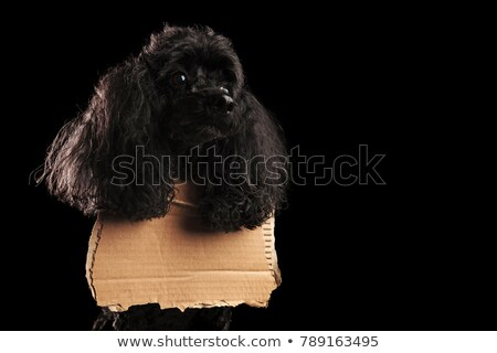 sad poodle wearing a blank sign at its neck  Stock photo © feedough