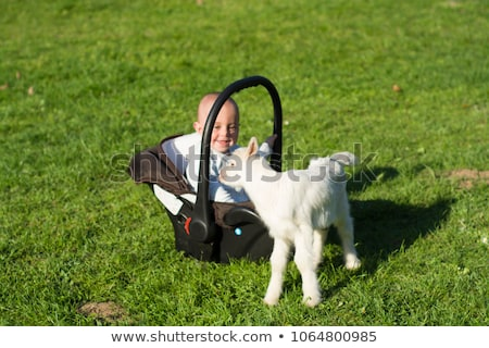 Copil capră iarbă joacă maşină Imagine de stoc © adamr