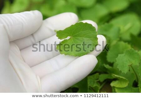 Folhas jardim mão folha verde Foto stock © bdspn