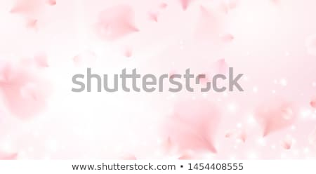 White  Flower vector Heart on the wind on pink background Stock photo © LisaShu