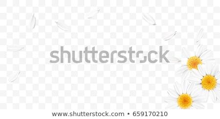 produktu · zestaw · przezroczysty · gradient - zdjęcia stock © cammep