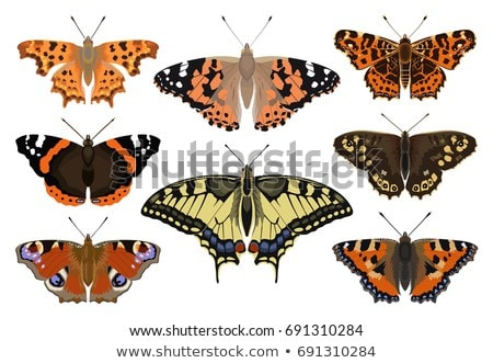speckled wood butterfly Stock photo © chris2766