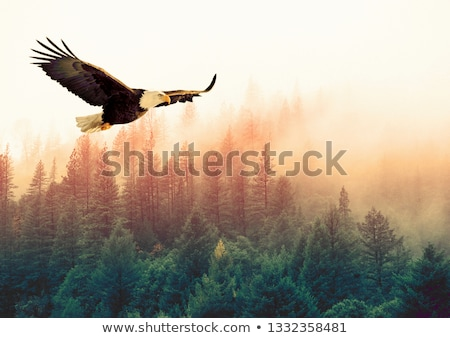 Birds are flying above the forest Stock photo © zzve
