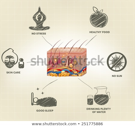 Healthy skin care advices. Healthy realistic skin anatomy and ha Stock photo © Tefi