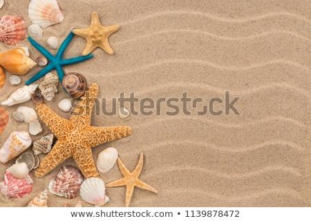 Seashells on Seashore Background Stock photo © derocz