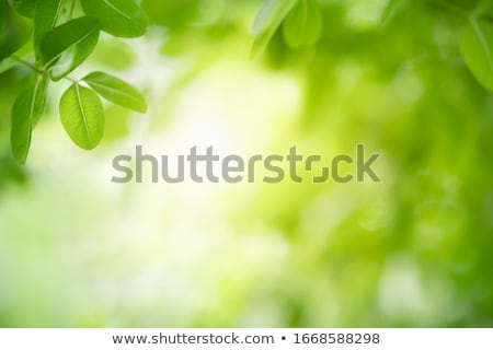 blue leaves background with bokeh effect Stock photo © SArts