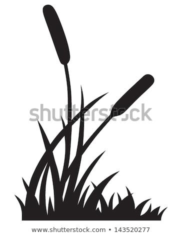 Clip Art Symbol Design Kunst Malerei Konzept Stock foto © blaskorizov