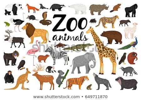 állat állatkert illusztráció víz fa erdő Stock fotó © colematt