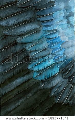 jackdaw iridescence stock photo © suerob