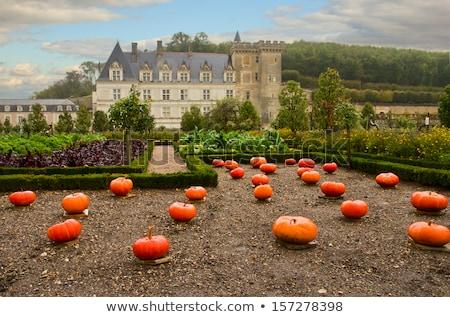 villandry castle at fall france stock photo © neirfy