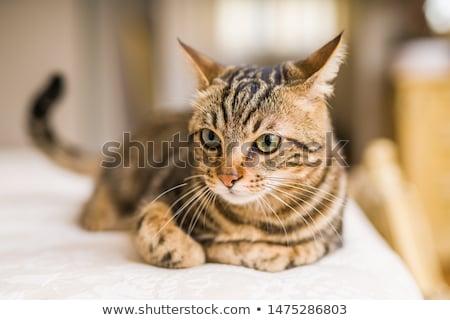 Dormir rojo gato mullido cama sueno Foto stock © nelsonart