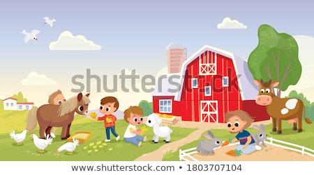 the farmyard Stock photo © clearviewstock