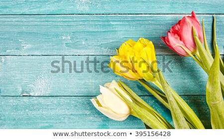 красный желтый тюльпаны древесины Tulip цветы Сток-фото © compuinfoto