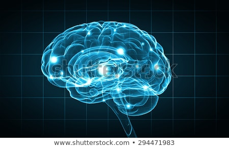 Human brain on a blue background Stock photo © Tefi