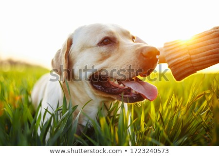 Stock photo: Lawn in hands.