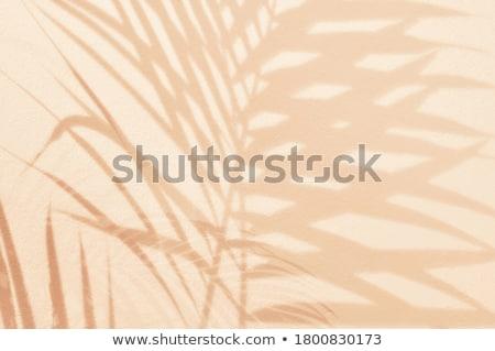 Pálmalevelek homok tengerpart óceán Stock fotó © Wetzkaz