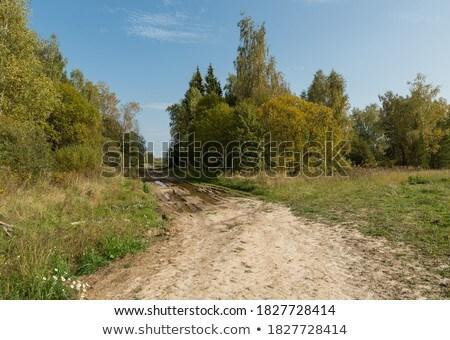 madeira · seguir · noite · árvore · grama · folha - foto stock © Pozn