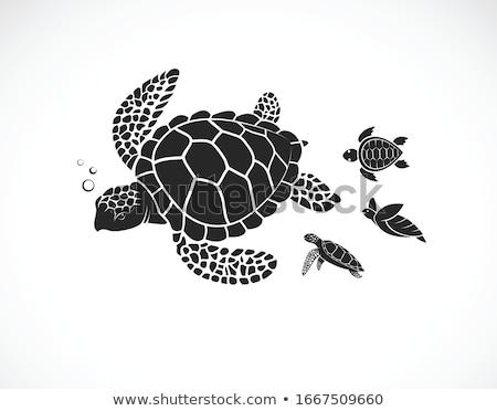 little sea turtle in love stock photo © cthoman
